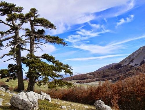 http://www.viaggiavventurenelmondo.it/immagini/pollino.jpg