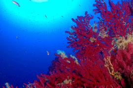 http://www.viaggiavventurenelmondo.it/immagini/ustica.jpg